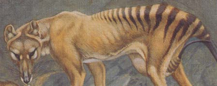 painting of a thylacine